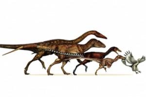 Nuevas señales sobre los dinosaurios como ancestros de pájaros modernos