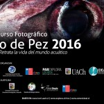 Concurso fotográfico busca destacar la biodiversidad marina de nuestro país