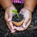 La curiosidad invade el aula: Servicios Locales podrán acceder a nueva oferta de iniciativas científicas
