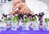 518 nuevos proyectos fueron seleccionados en el Concurso Fondecyt Regular