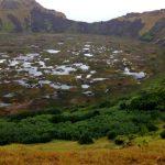 Rescatan plantas medicinales nativas en extinción en Isla de Pascua