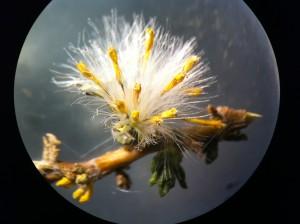 CIHDE analiza plantas medicinales del altiplano en universidad de Inglaterra