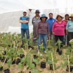 CIHDE entregó 500 Golden Berry a la comunidad de Saxamar