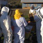 Ceres desarrolla novedosa red de monitoreo del ácaro en la Región de Valparaíso