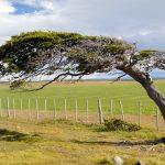 Investigador CIEP contribuye a identificar las causas de la creciente mortandad de árboles