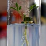 CGNA trabaja en potenciar raíces para afrontar el cambio climático
