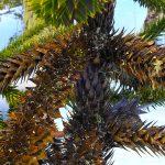 El cambio climático y la mortalidad arbórea