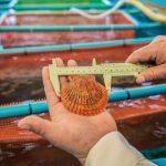 Estudio afirma que el ostión presentaría cualidades adaptativas al cambio climático