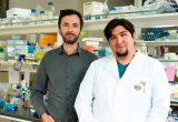 Investigación Fondecyt sobre formación cerebral es publicada en la revista Nature Cell Biology