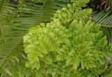 Algunas plantas se aclimatarían a diversas condiciones de luz para mantener su proceso fotosintético